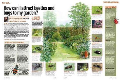 garten artikel how to attract beetles and bugs to your garden discover