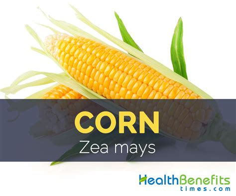 Calories In Root Vegetables - corn facts health benefits and nutritional value