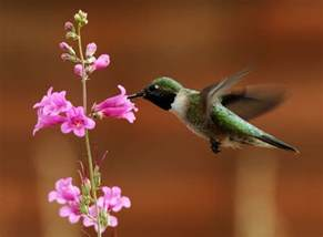 are hummingbirds color blind s hummingbird