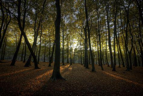 The Woods file hopwas woods sun jpg wikimedia commons