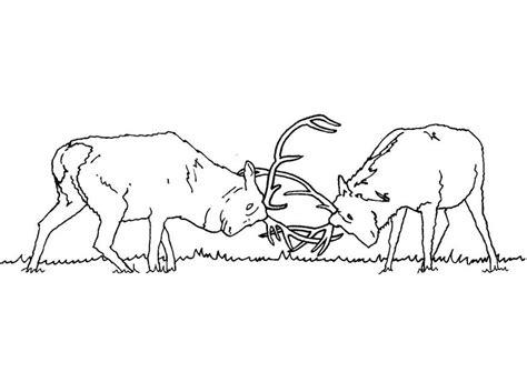 deer fighting coloring pages dibujo para colorear ciervos luchando img 9467