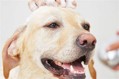 bagno ai cani ogni quanto fare il bagno al donnad