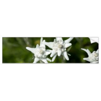 Edelweiss Aufkleber by Edelweiss Aufkleber Zazzle At