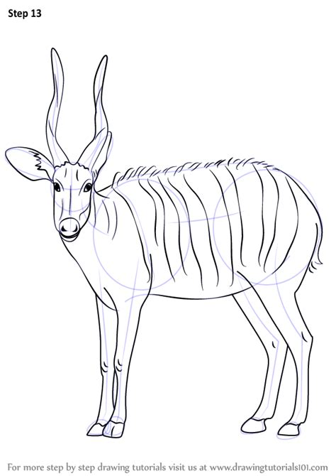 learn   draw  bongo antelope wild animals step  step drawing tutorials
