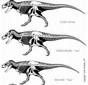 15m Tyrannosaurus Rex