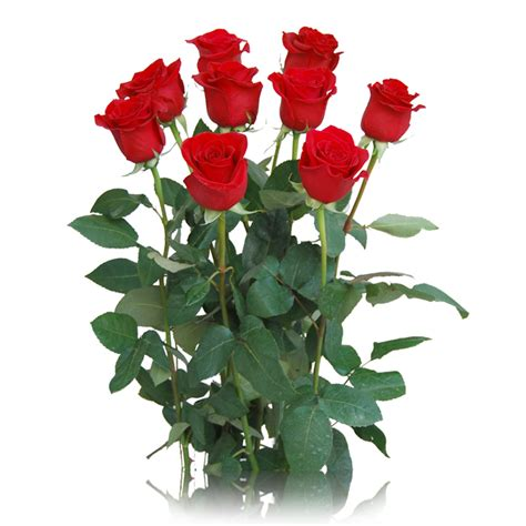 imagenes de rosas blancas naturales arreglo de rosas rojas regalarflores net