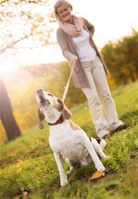 signs of arthritis in dogs a guide to arthritis in dogs argos pet insurance