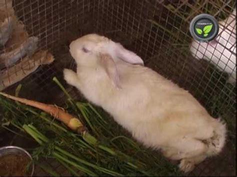 has diarrhea but acts a rabbit has fever doovi