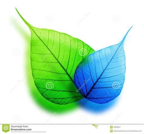 Kemeja Green Blue Leaf macro green and blue leaf stock photo image 39383047