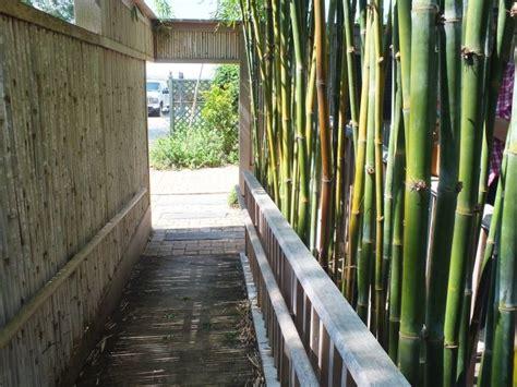 Brise Vue Naturelle Jardin by Plantes De Jardin Le Bambou Fascinant Et Polyvalent