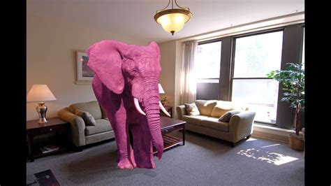 the pink elephant in the room pink elephant in the room