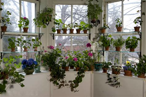 Window Garden Plants Summer Vacation For Houseplants