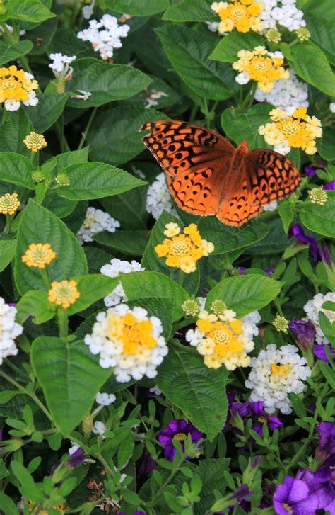 Flowers For Butterfly Garden Butterfly Gardens Open House For Butterflies