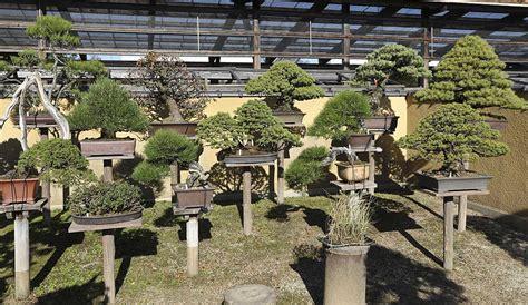 autumn 2014 japan bonsai exploration part 1 valavanis bonsai blog