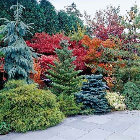 Evergreen Landscaping Ideas Blue Spruce Evergreen And Bright Yellow On Pinterest
