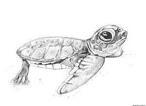 turtle drawing best images collections hd for gadget