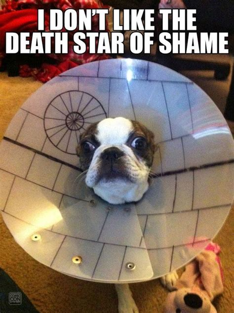Cone Of Shame Meme - cone of shame upgrade starwars silly dawgs and lol