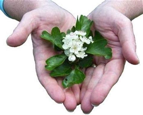 posologia fiori di bach fiori di bach tisane propriet 224 fiori di bach