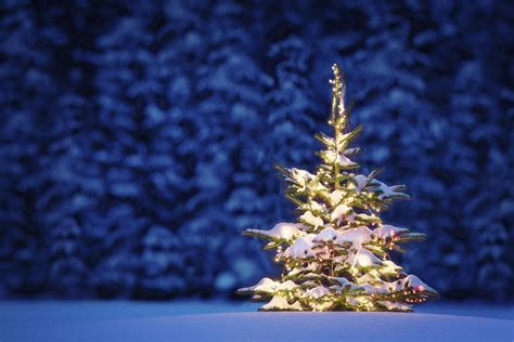 2016 christmas tree hd wallpaper merry christmas tree