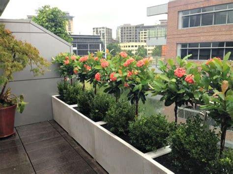 como decorar con plantas una terraza como decorar balcones y terrazas con plantas naturales