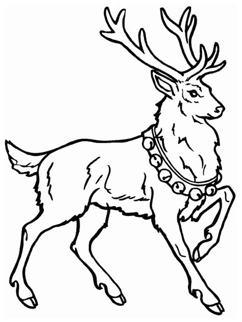 whitetail deer coloring pages coloring home