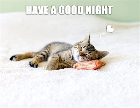 Have A Good Night Meme - have a good night meow aum cute kitten pics litle pups