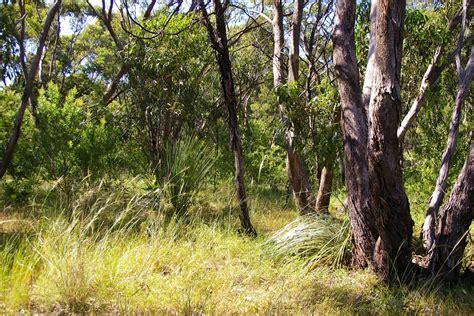 Grey box grassy woodland restoration mandilla reserve flagstaff hill