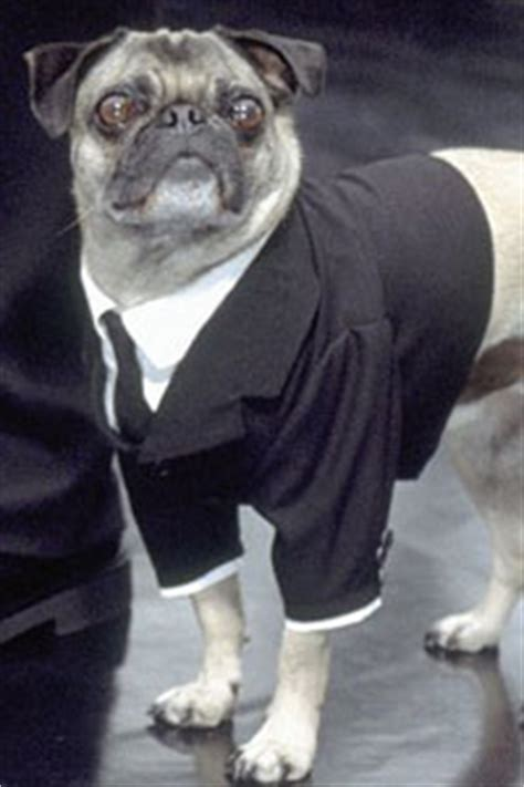 frank the pug from in black frank the pug in black