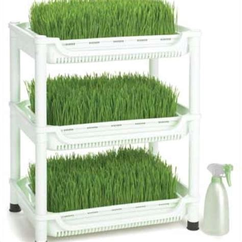 easy grow wheatgrass 17 best images about wheat grass on pinterest barley
