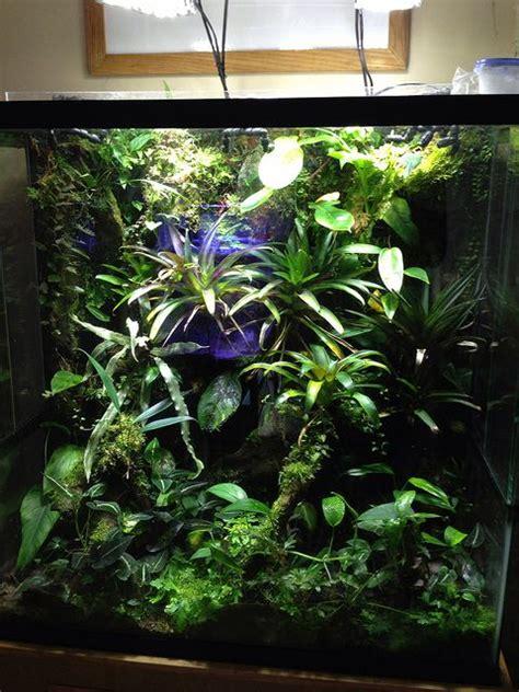 17 meilleures images 224 propos de paludarium indoor jungles sur pinterest grenouilles