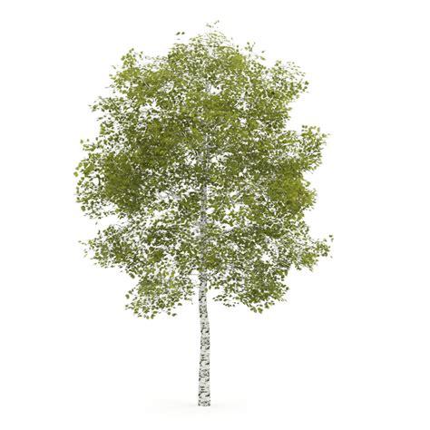 top 28 birch tree items daxushequ