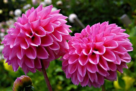 imagenes flores jpg fondos de pantalla flores im 225 genes taringa