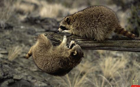 Amazing Animals Amazing Wildlife Images My Hd Animals