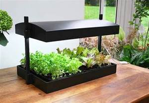 cool plants to grow indoors www imgarcade com online
