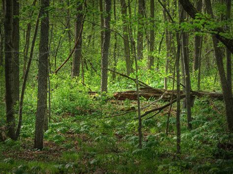 deep forest green deep forest green free stock photos in jpg format for free