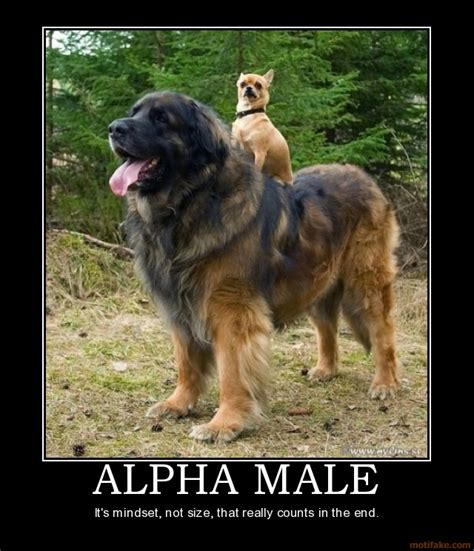 Gay Dog Meme - author phil torcivia s blog alpha male training