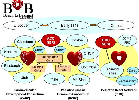 bench to bedside translational research for cardiovascular diseases at the