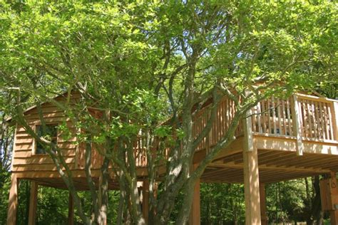 tree house plans on stilts 17 looking tree house on stilts ideas