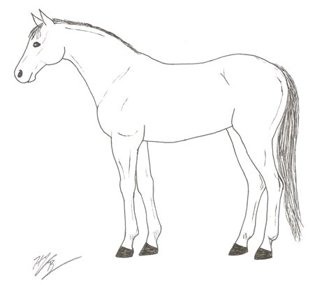 horse skeleton coloring page youth activity sheets fun facts kentucky horse council