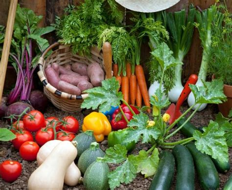 early veggies you should start planting gardening