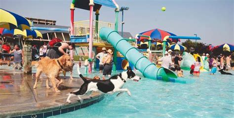 Moscow aquatics center is 'structurally unsafe' | Local ...