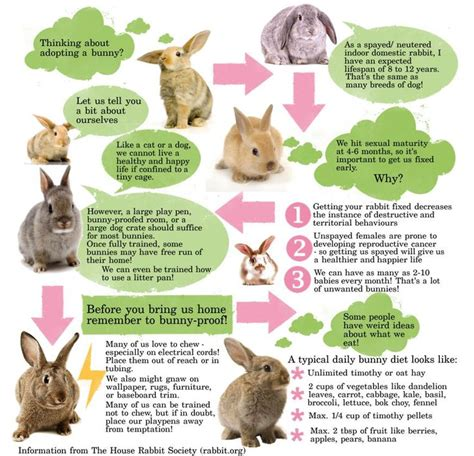 8 Tips On Caring For Pet Rabbits by 17 Best Images About Rabbit 4 H Leader On
