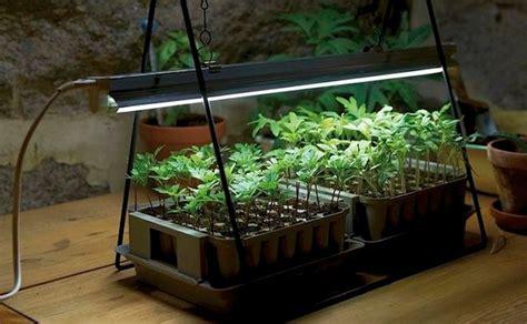 led grow lights  nasas technology  indoor gardens