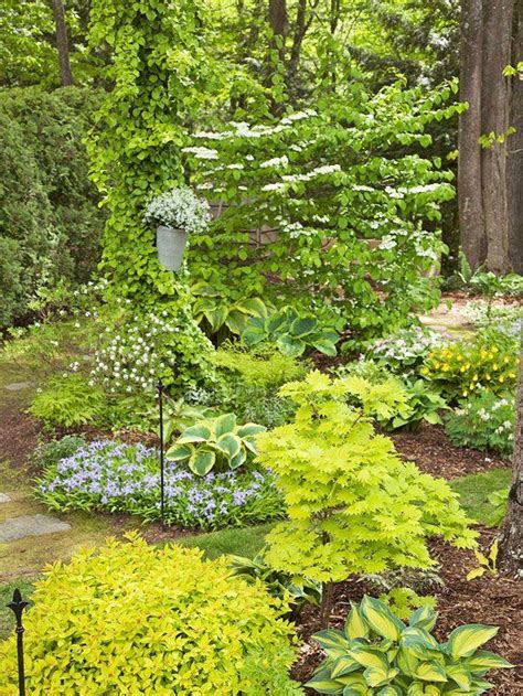 Garten Pflanzen Schatten by 220 Ber 1 000 Ideen Zu Schattengartenpflanzen Auf