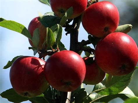best places for apple picking 171 cbs pittsburgh