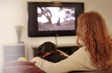 dogtv now dogs can tv while their owners are at