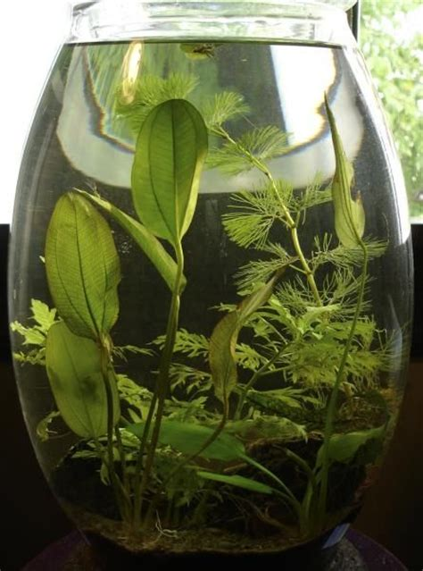 container water garden plants container water plants water plants