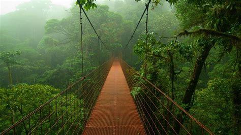 Suspended bridge in the jungle Wallpaper #9884 Bridge