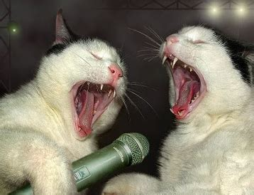cat singing singing cats that will make you smile meow meow