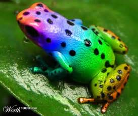 colorful frog can t live without frogs on frogs tree frogs